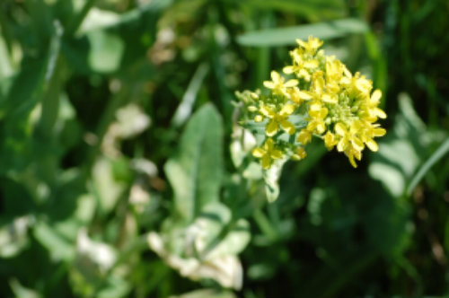 Spring Wildflowers and a Great Online Identification Tool