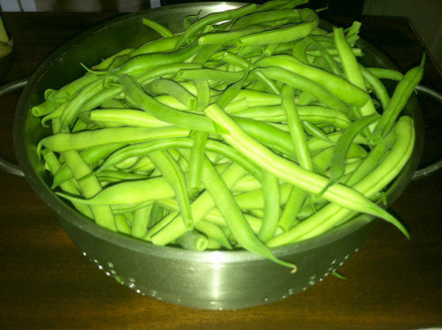 Green Beans Galore