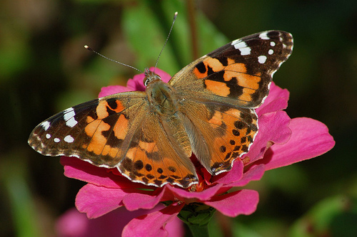 Year Round Nature Activity for Kids: Raising Butterflies