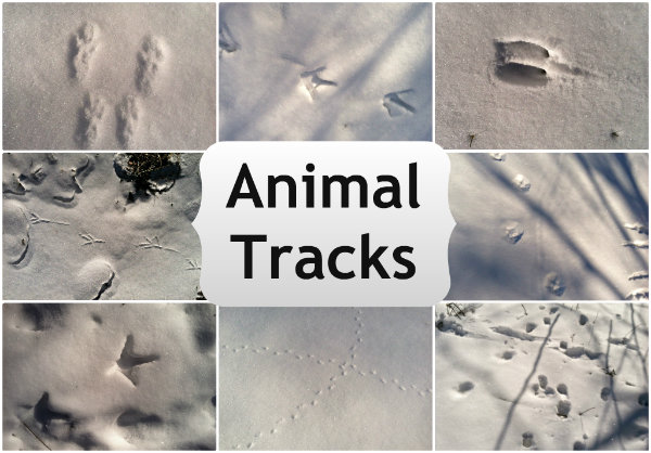 Exploring Nature With Kids: Winter Nature Walk {Animal Tracks}
