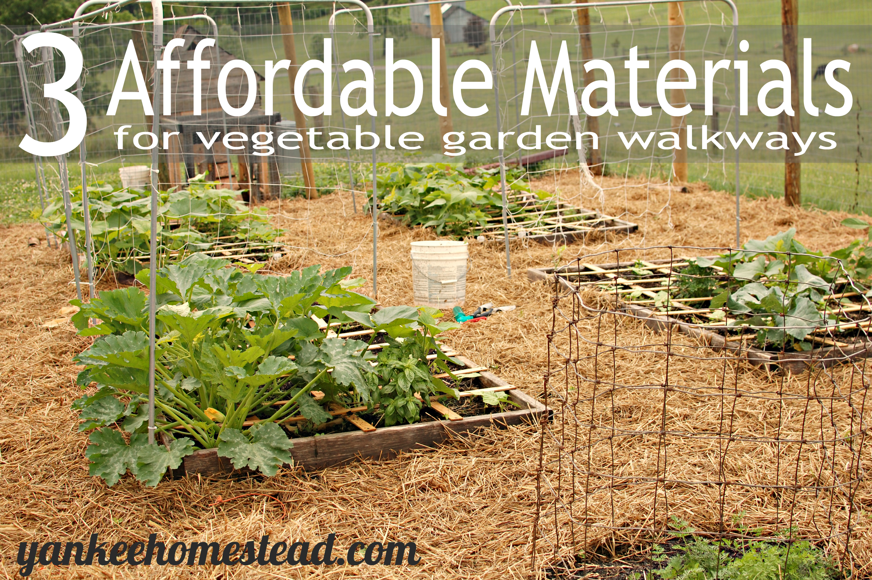 3 Affordable Materials for Vegetable Garden Walkways