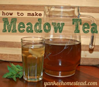 How to Make Meadow Tea | Yankee Homestead