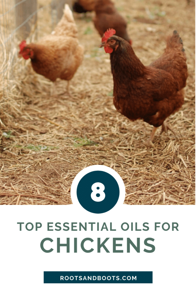 8 Top Essential Oils For Chickens | Roots & Boots