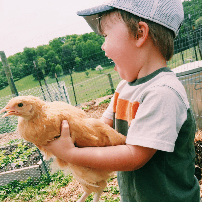 Essential Oils For Chickens | Roots & Boots