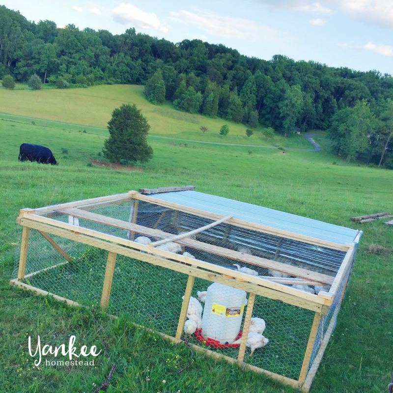 How to Raise Pastured Poultry | Yankee Homestead