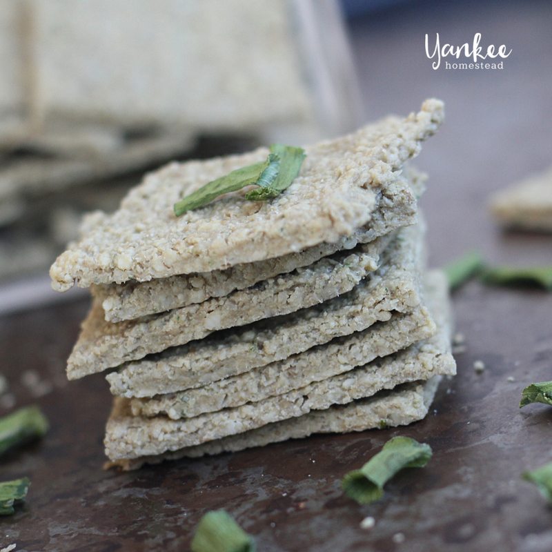Onion Nut Dehydrator Crackers | Yankee Homestead