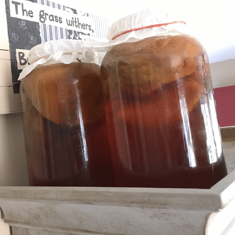 How to Make Kombucha | Yankee Homestead