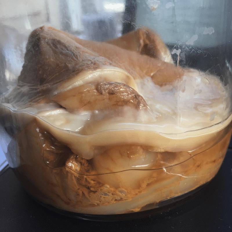 How To Make Kombucha   Roots & Boots