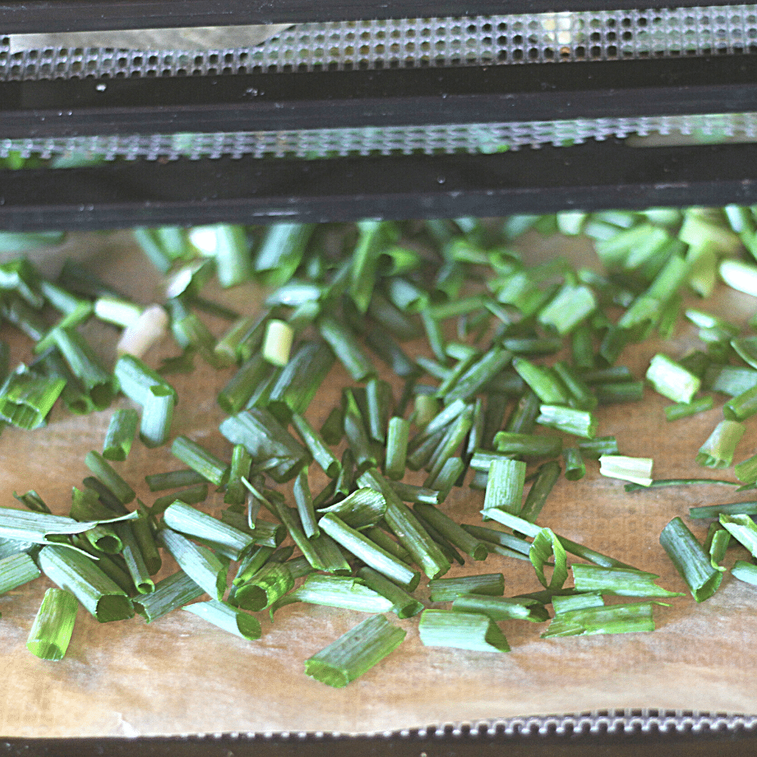 How to Dry Green Onions | Yankee Homestead