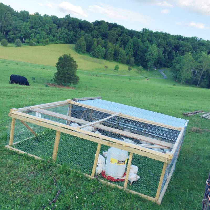 The Real Cost of Raising Meat Birds | Yankee Homestead
