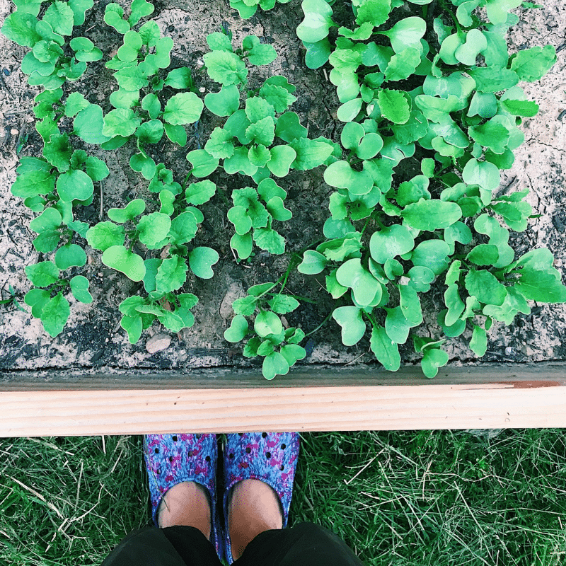 3 Important Tips for Hugelkultur Raised Beds | Roots & Boots