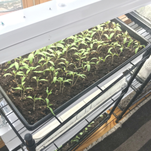 Simple DIY Seed Starting System | Roots & Boots