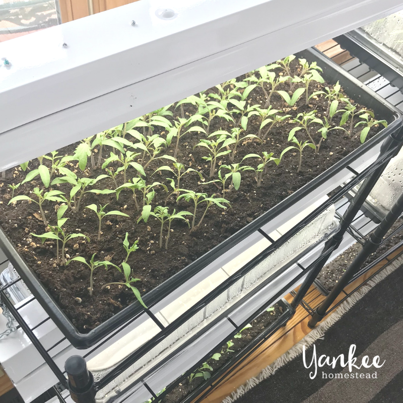 How to Create a Simple Seed Starting System | Yankee Homestead