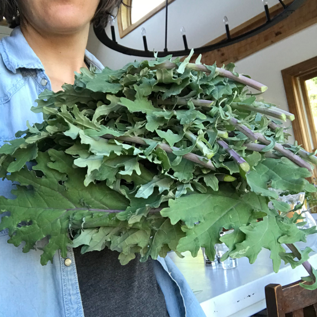 Why I Stopped Eating Raw Kale | Yankee Homestead