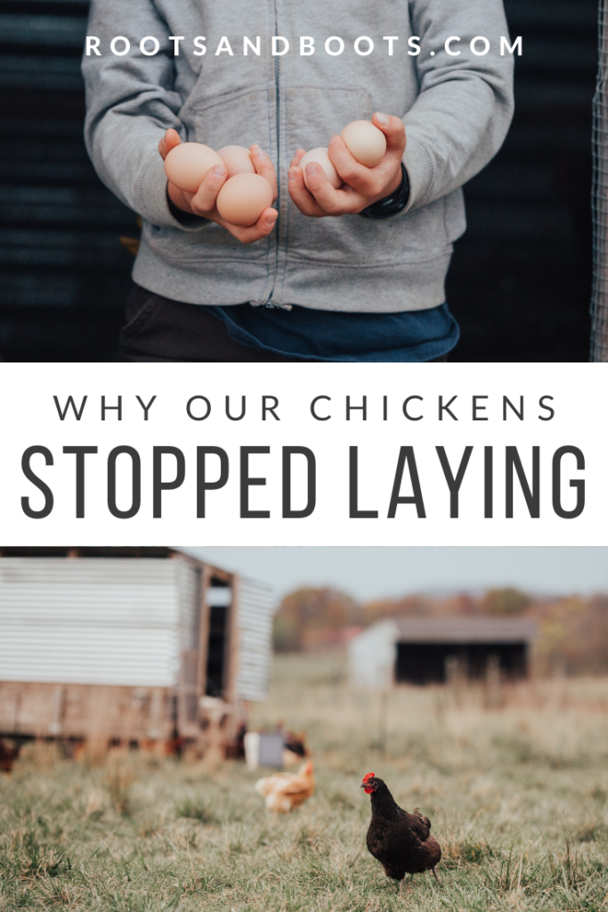 Our Chickens Stopped Laying | Roots & Boots