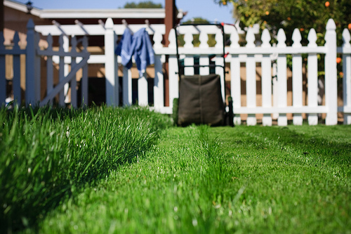 mow the yard
