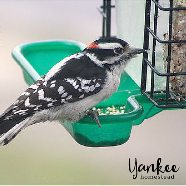 Birding with Kids | Yankee Homestead