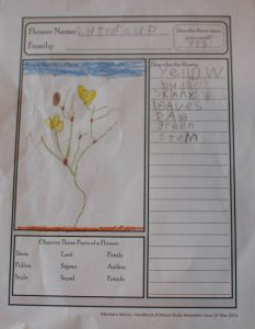 Buttercup Nature Journal Page