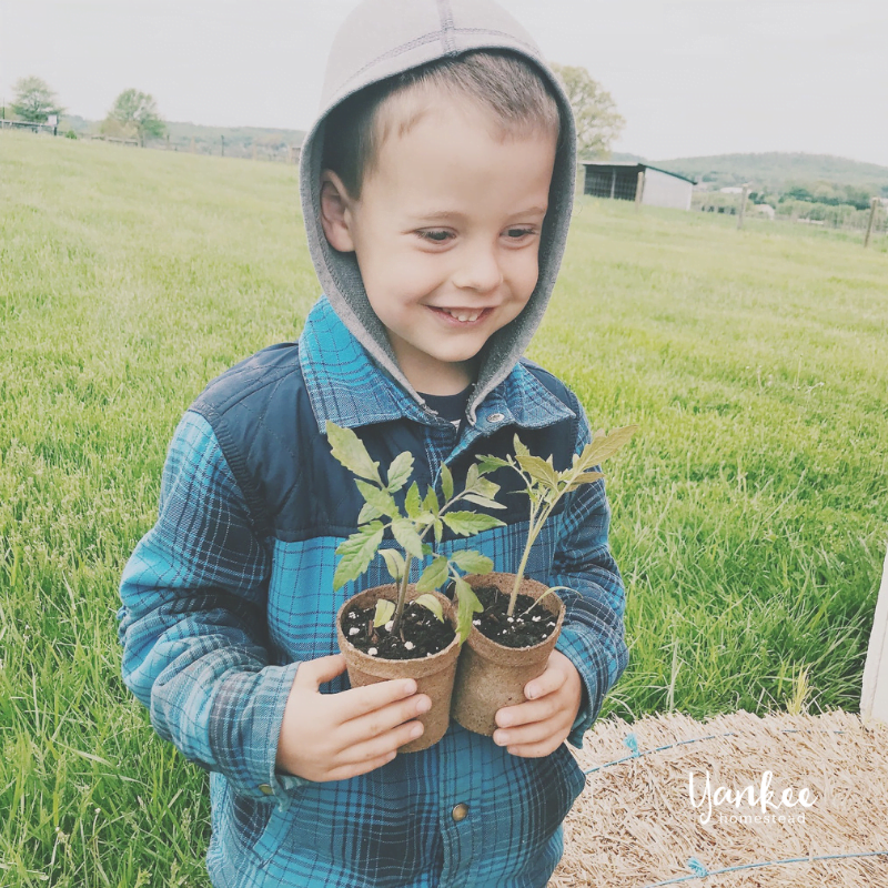 How to Teach Kids Where Food Comes From | Yankee Homestead