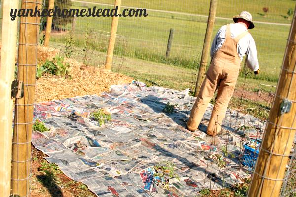 3 Affordable Materials for Vegetable Garden Walkways | Yankee Homestead