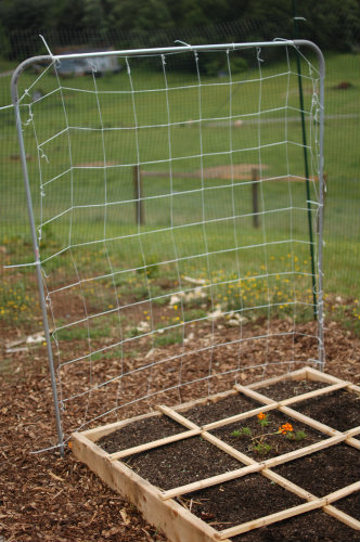 Square Foot Gardening--Completed Trellis