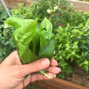 25 Ways to Use Fresh Basil