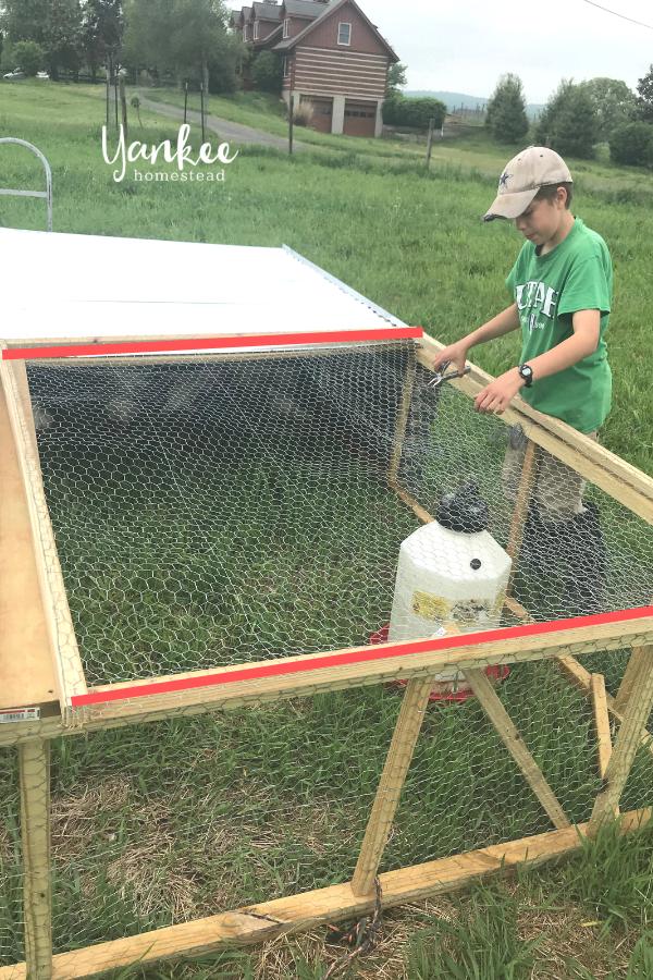 DIY Chicken Tractor | Yankee Homestead