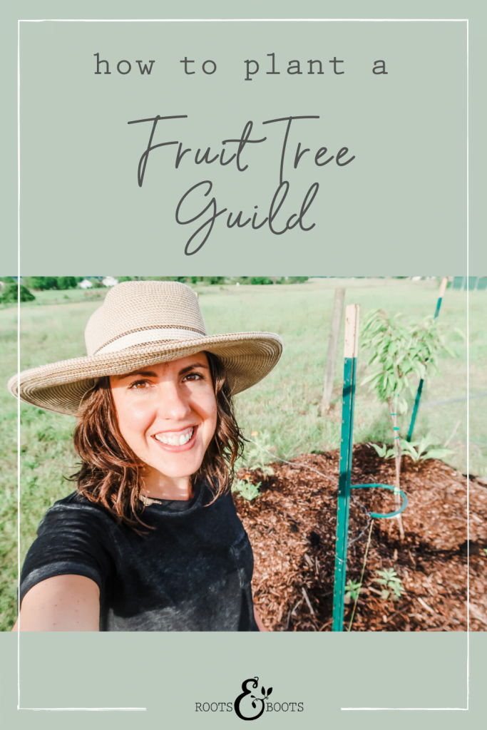 How to Plant a Fruit Tree Guild | Roots & Boots