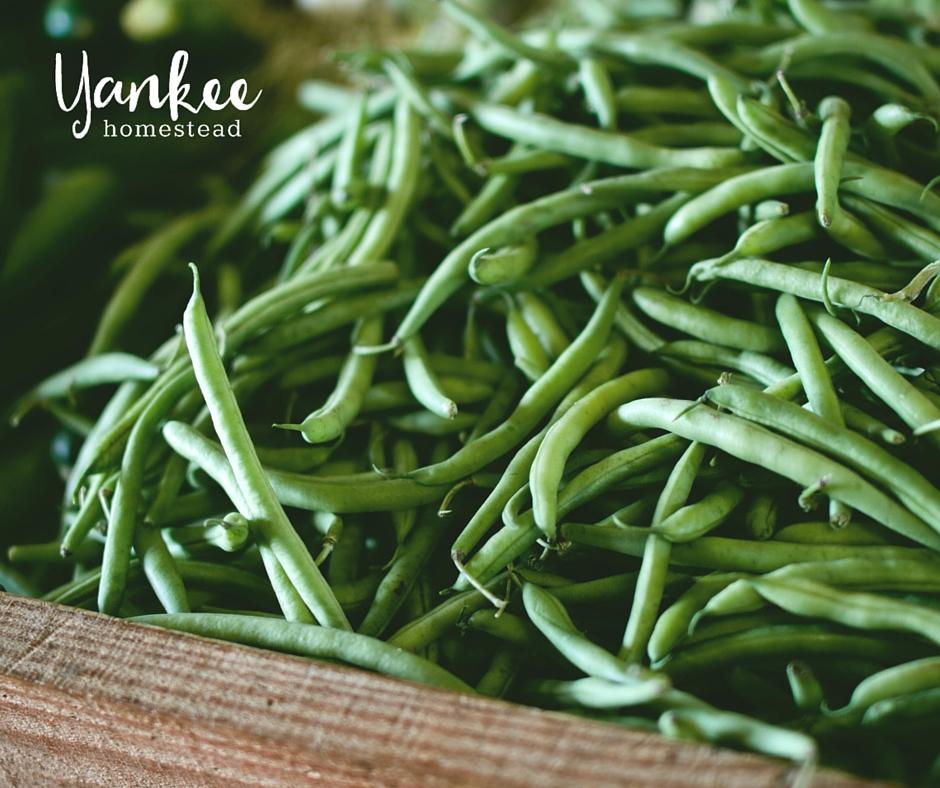 Organic Gardening: Want Better Veggies? Try Companion Plants!