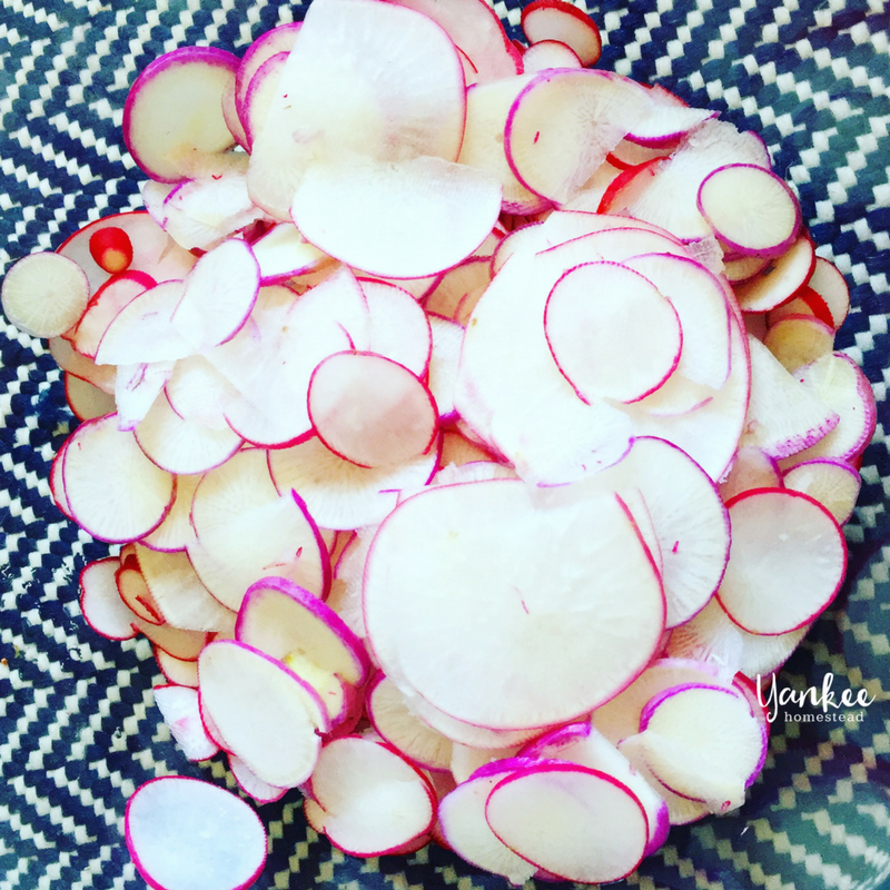 Canning Honey Pickled Radishes | Yankee Homestead