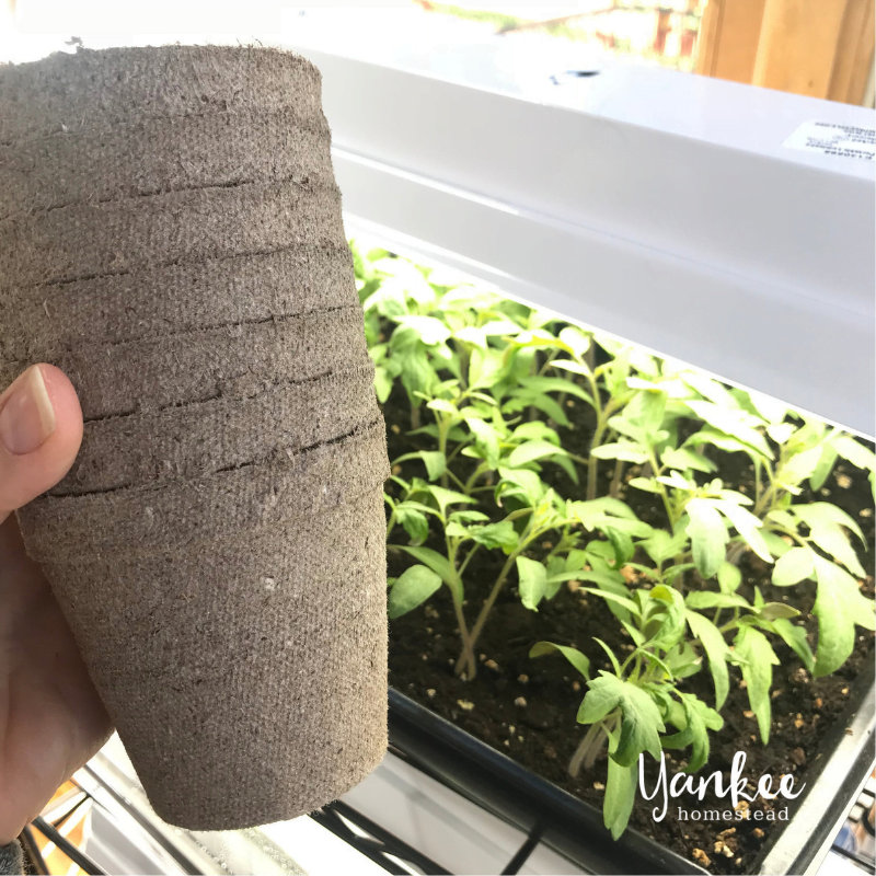 How to Start Seeds Indoors | Yankee Homestead