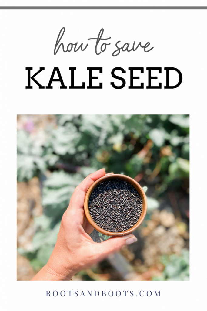 How to Save Kale Seed | Roots & Boots