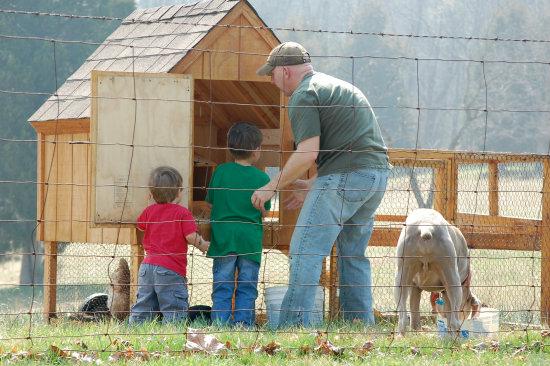 new chicken coop