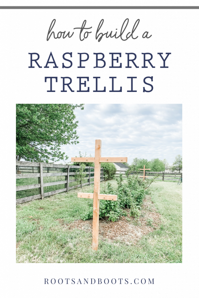 How to Build a Raspberry Trellis | Roots & Boots