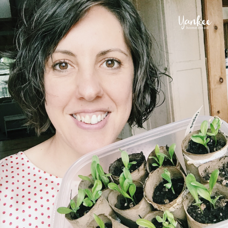7 Reasons to Start Your Own Seeds Indoors