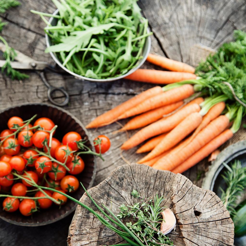 10 Best Veggies for Beginning Gardeners