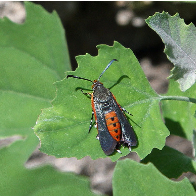 How to Get Rid of Vine Borers for Good | Yankee Homestead