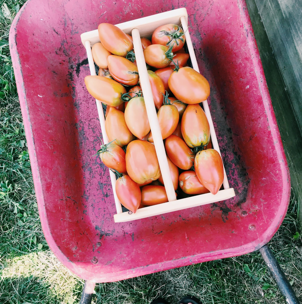 Do This With Homegrown Tomatoes | Roots & Boots