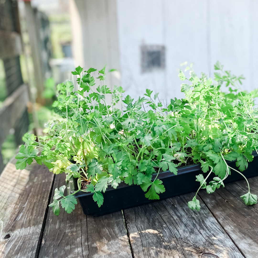 The Easy Way to Harden Off Seedlings | Roots & Boots