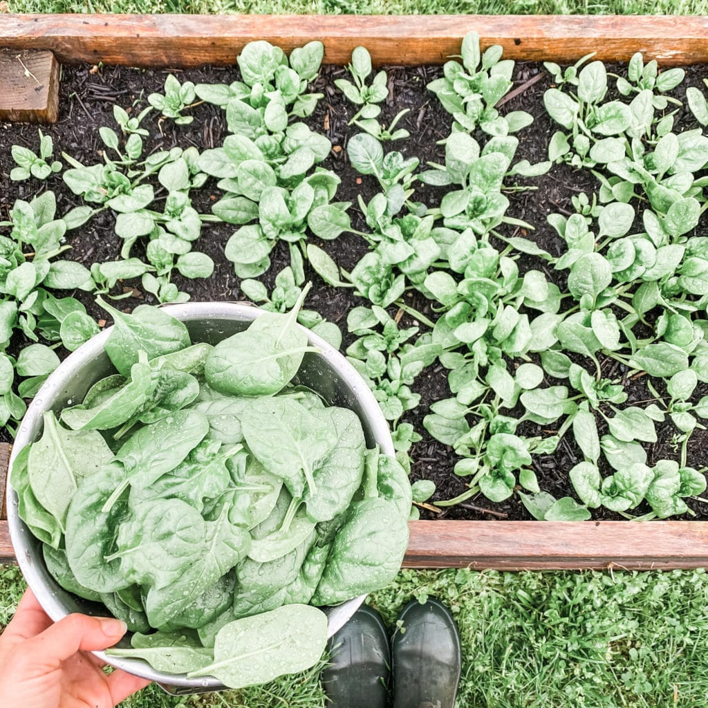 12 Best Veggies for Your Spring Garden | Roots & Boots