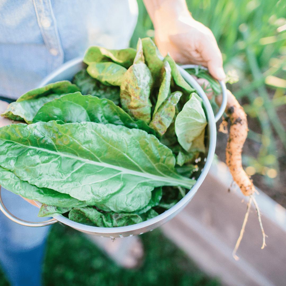 16 Best Veggies for Your Fall Garden
