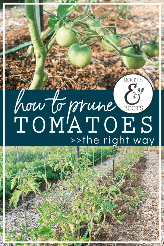 Top Two Ways to Prune Tomatoes | Roots & Boots