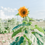 6 Tips for Gardening in Heavy Clay Soil | Roots & Boots