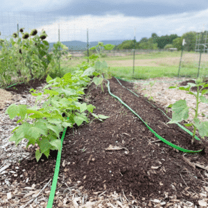 How to Create Trenched Hugelkultur Beds | Roots & Boots