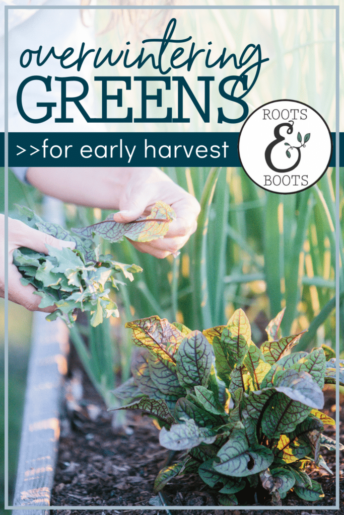 How to Overwinter Greens for Early Harvest | Roots & Boots
