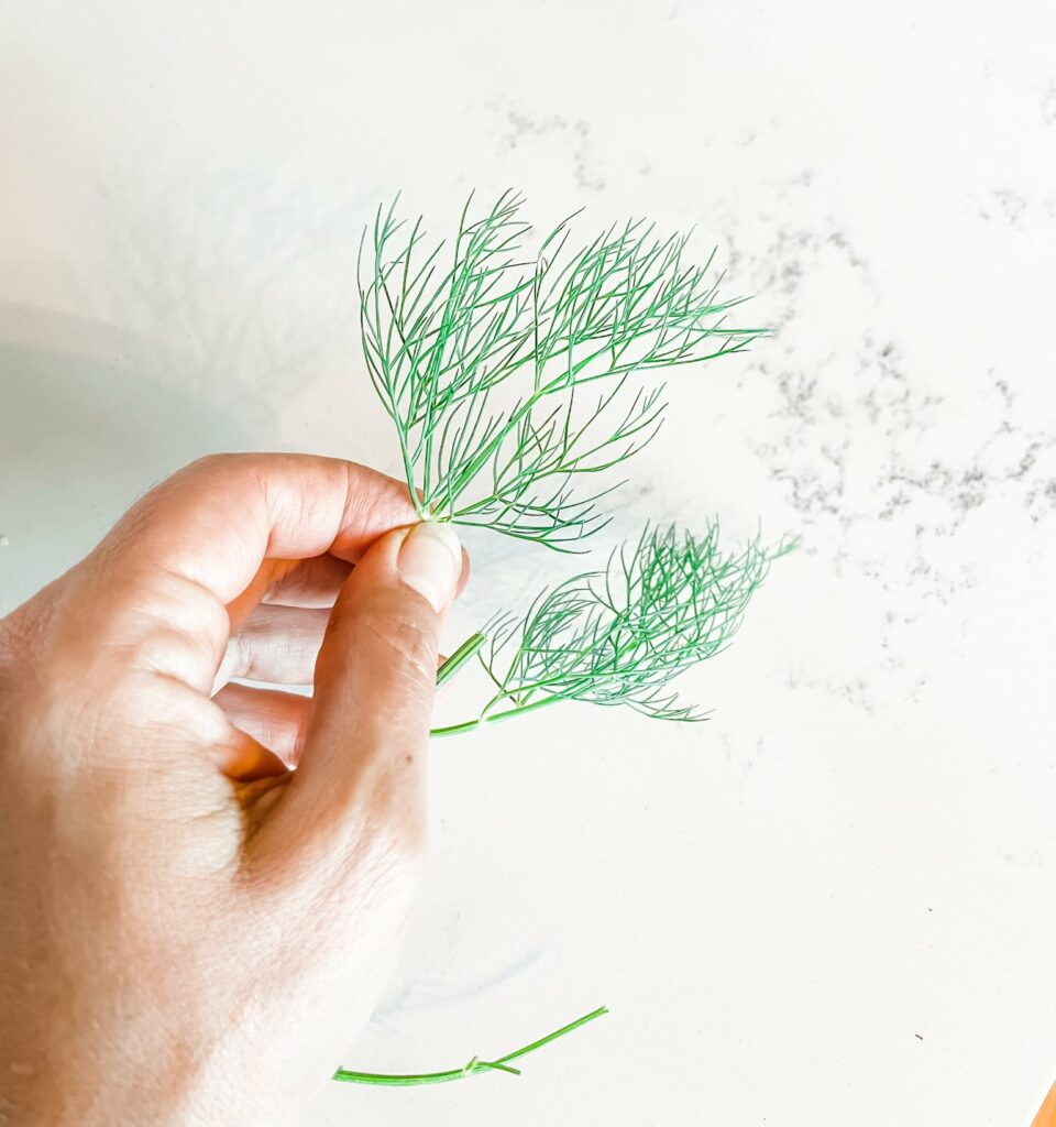How to Dry Your Own Herbs in a Dehydrator | Roots & Boots