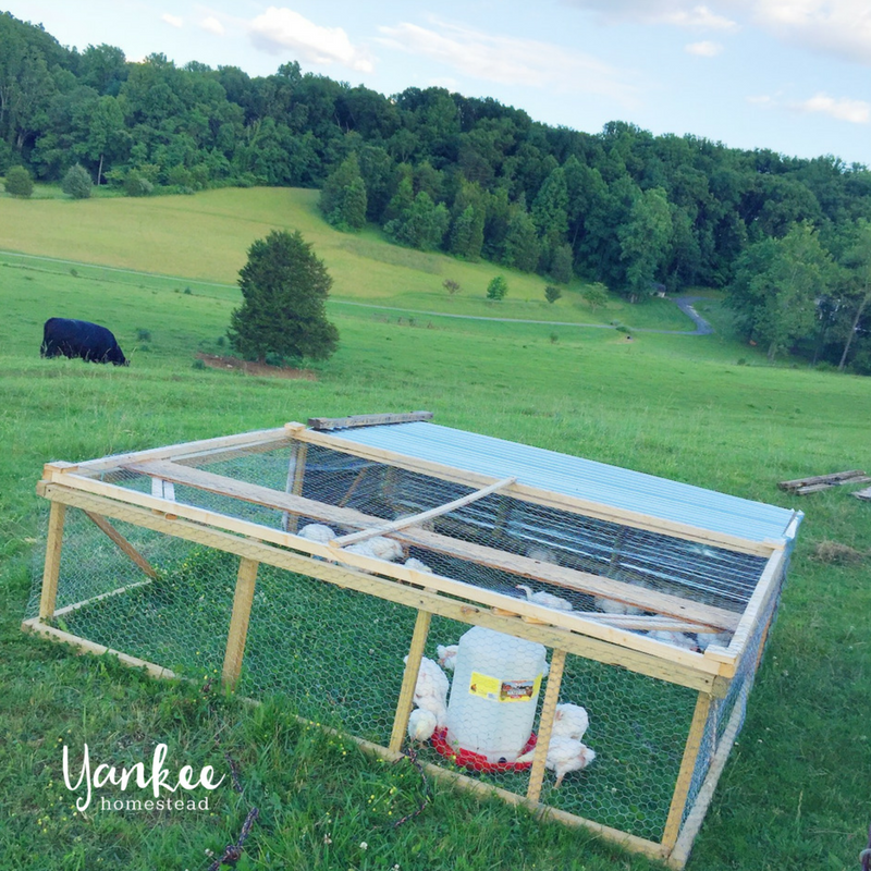 How to Raise Pastured Poultry