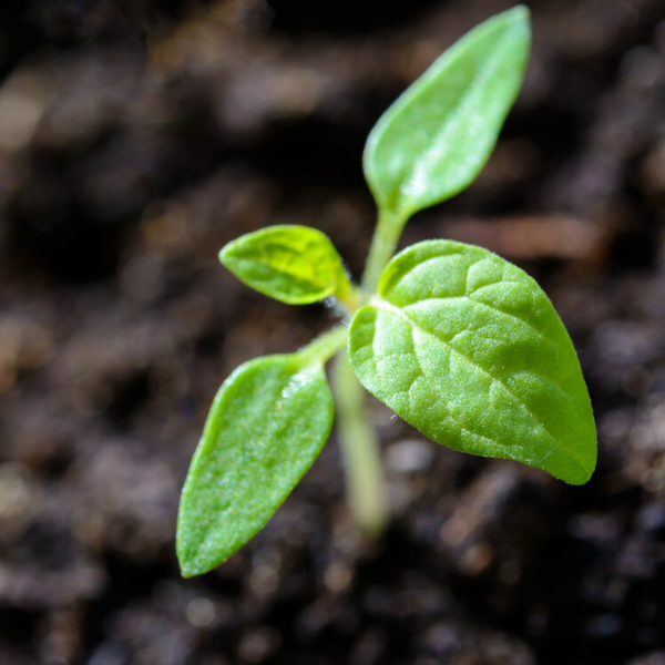 Seed Starting Checklist